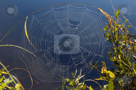 Spider web stock photo, Spider web on high blade of grass in Killarney park by Pavel Cheiko