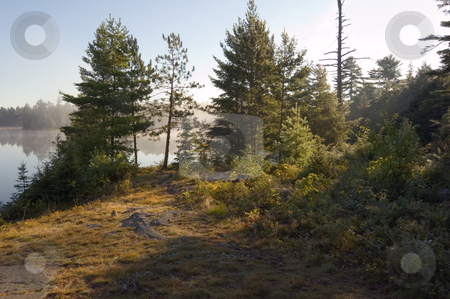 Morning stock photo, Early morning in forest of Killarney Park by Pavel Cheiko