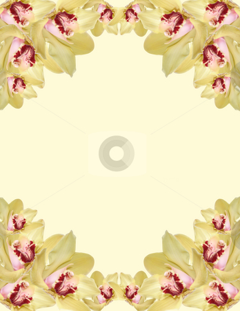 Orchid border stock photo, Orchid flowers border isolated on white background by Desislava Dimitrova
