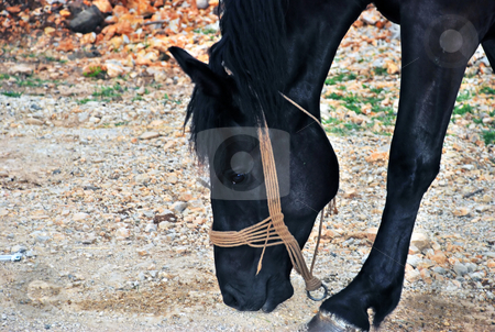 Black horse stock photo, Beautiful black horse walking on country road by Julija Sapic