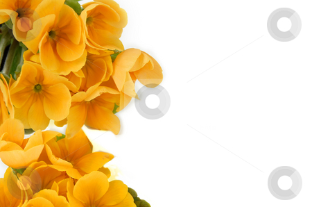 Spring flowers stock photo, Yellow spring flowers frame over white background by Julija Sapic