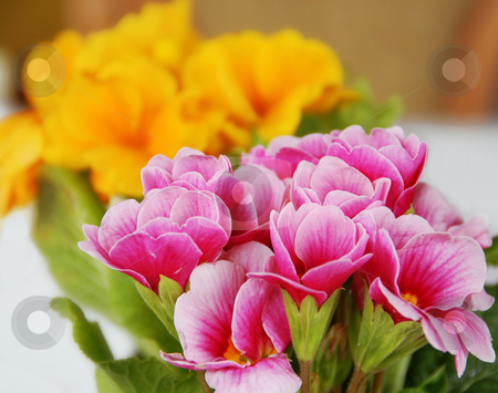 Spring flowers stock photo, Pink and yellow spring flowers natural background by Julija Sapic