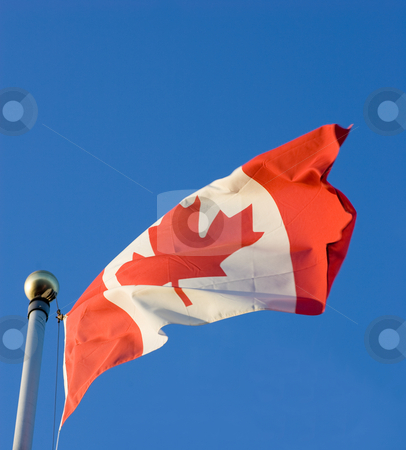 Waving Canadian Flag stock photo, The Canadian Flag, waving in the breese, with a clear blue sky background. by Kevin Woodrow