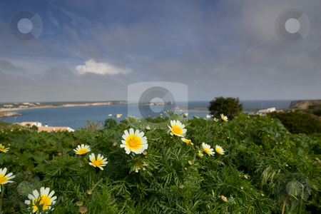 Flowers Overlooking Bay stock photo, Daisies overlooking the bay at Sagres, in the Algarve, Portugal. by Kevin Woodrow
