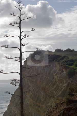 Lonely tree surrounded by cliffs stock photo, A single bare tree with cliffs, sky and the ocean in the background. by Kevin Woodrow