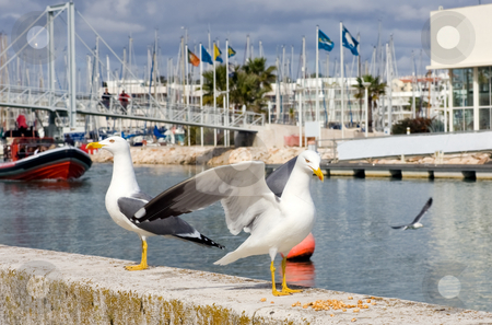 Guards birds at the marina entrance stock photo, 2 Seaguls in the foreground, guarding the entrance to a marina. by Kevin Woodrow