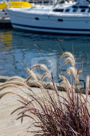 On the docks stock photo, Wild grasses dominate the foreground, while a section of dock, water and a large sailboat comprise the background. by Kevin Woodrow