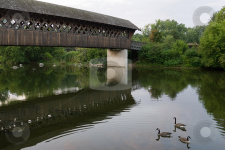 Covered Bridge Perspective stock photo, A view of a covered bridge, with 3 Canada Geese swimming in the water nearby.  Guelph, Ontario, Canada by Kevin Woodrow