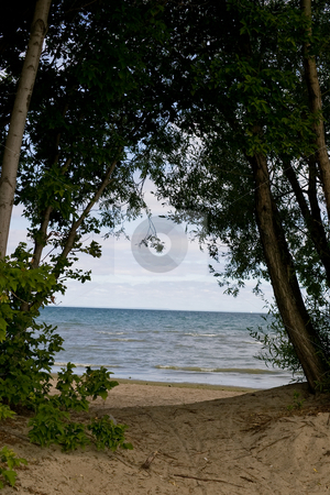 Window to the water stock photo, Trees on the beach acting as a window to the water beyond. by Kevin Woodrow