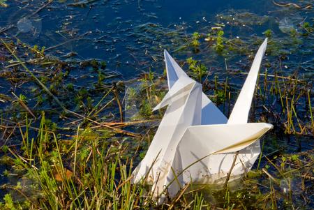 Oragami Crane stock photo, A paper oragami crane in a body of water. by Robert Byron