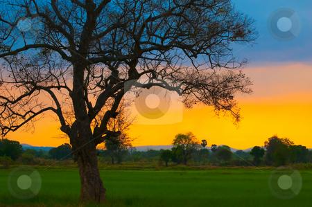 Beautiful Sunset stock photo, Dramatic scene of sunset with vivid colors by Pawee Lorsuwannarat
