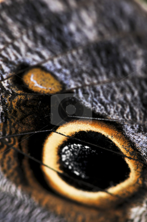 Owl Butterfly wing spots stock photo, Extreme closeup of owl butterfly wing spots by Elena Elisseeva