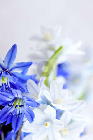 First spring flowers stock photo, Floral background of first spring flowers close up by Elena Elisseeva