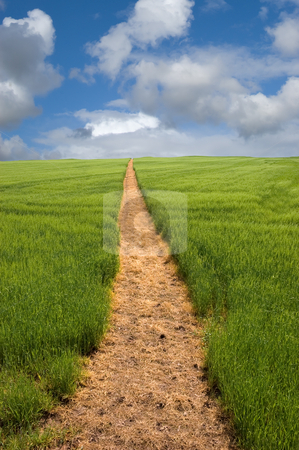 Footpath to the Horizon stock photo, Long golden yellow footpath leads across green fields and up a hill to the distant horizon under a blue cloudy sky by Peter Cox