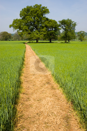 Footpath over a Grass Field stock photo, Long yellow footpath leads across a green grass field on farmland past distant trees by Peter Cox