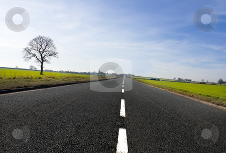 Country Road stock photo, Long country road with white lines down the centre stretching off past a lone tree to the distant horizon by Peter Cox