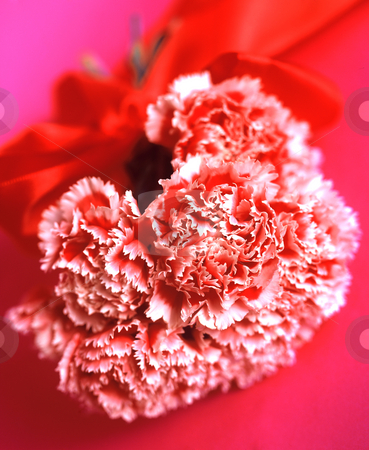 Spanish Greetings stock photo, Bouquet of red and white tipped Carnations with red Ribbon,  3509x4282 Pixel, 43,0 MB, 300 dpi by Ute Wingenfeld