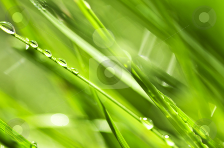 Green grass background stock photo, Natural background of dewy green grass blades close up by Elena Elisseeva