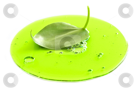 Fresh leaf in green liquid stock photo, Abstract image of a plant leaf in a puddle of green liquid by Elena Elisseeva