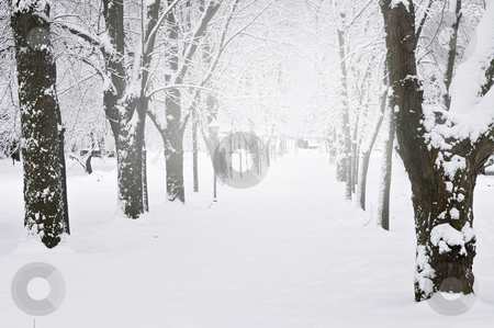 Lane in winter park stock photo, Lane in winter park with snow covered trees by Elena Elisseeva