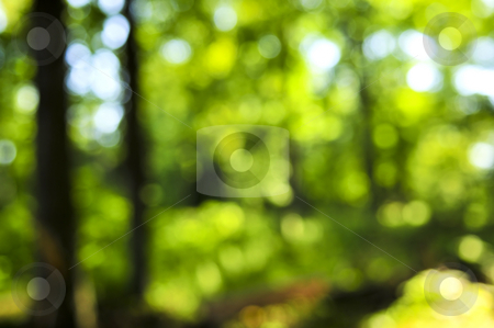 Green background stock photo, Green natural background of out of focus forest or bokeh by Elena Elisseeva