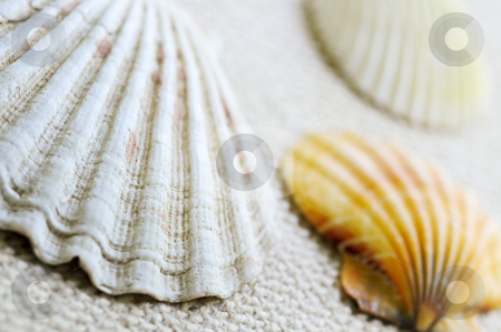 Seashells stock photo, Background of several colorful seashells close up by Elena Elisseeva
