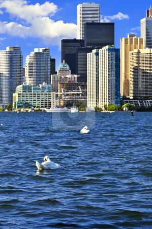 Toronto waterfront stock photo, Toronto waterfront with white swans in the harbour by Elena Elisseeva