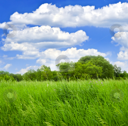 Grass and trees stock photo, Grass and trees with cloudy blue sky by Elena Elisseeva