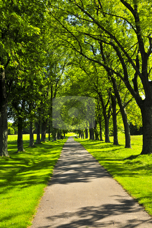 Path in green park stock photo, Recreational path in green park lined up with trees by Elena Elisseeva