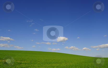 Field and sky stock photo, Green field and blue sky by Magnus Johansson