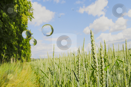 Bubble field stock photo, Bubbles with reflections flying over weat field by Magnus Johansson