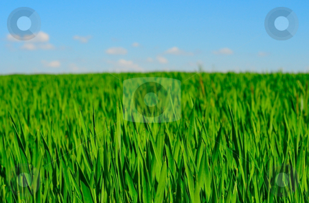 Closeup field stock photo, Green field and blue sky by Magnus Johansson
