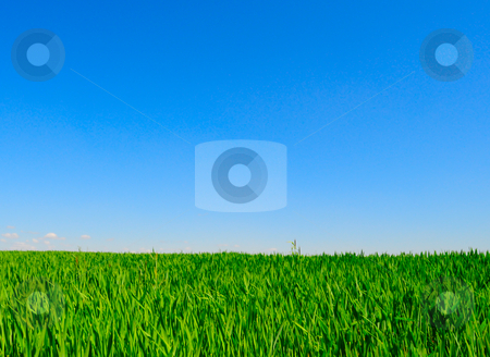 Green grass_10 stock photo, Green field and clear blue sky by Magnus Johansson