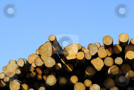 Timber stock photo, Pile of timber and blue sky by Magnus Johansson