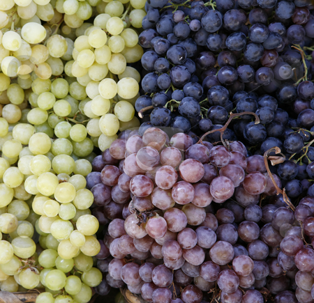 Grapes from tuscony stock photo, Grapes on a market in Siena, Tuscany, Italy, Europe by mdphot