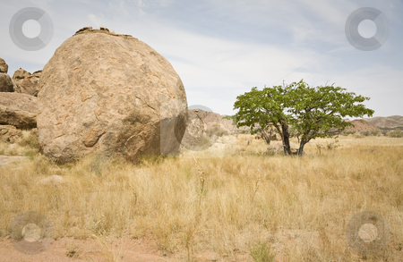 Boulder and Tree stock photo, Huge boulder in Damaraland, Republic of Namibia, Africa. Look close in the shadow under the tree: we are beeing observed! by mdphot