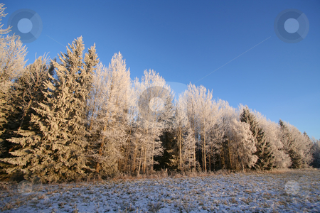 Frosen forest stock photo, Frosen forest by Ingvar Bjork