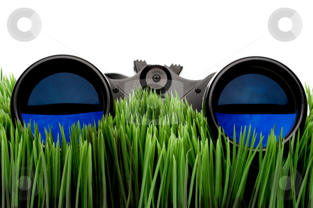 Horizontal close-up of binoculars on green grass with a white ba stock photo, Horizontal close-up of binoculars on green grass with a white background by Vince Clements