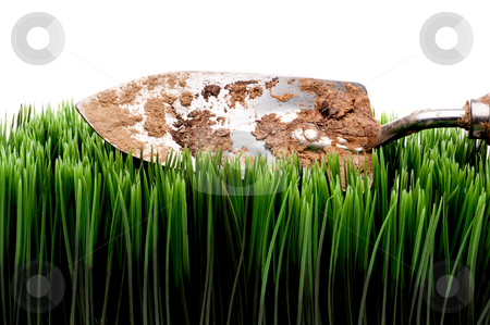 A horizontal view of a dirty garden spade on grass on a white ba stock photo, A horizontal view of a dirty garden spade on grass on a white background by Vince Clements