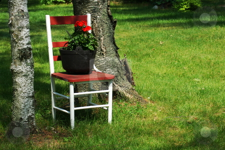 Garden chair stock photo, This old wooden chair has new life as a plant stand for a red geranium displayed in an vintage black metal cooking pot. by Dennis Thomsen