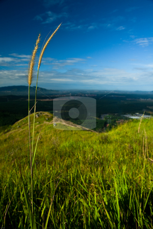 Grass stock photo, A nice view from Broga Hill by Mohamad Shahrol Azmi Bin Osman