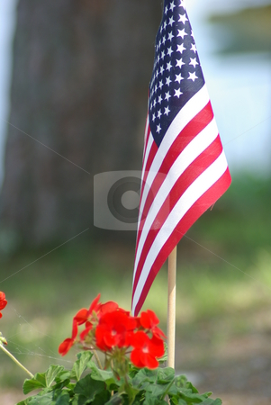 Symbol of freedom stock photo, A small version of the Stars and Stripes stands ready for the holidays in a planter filled with blooming red geraniums. by Dennis Thomsen