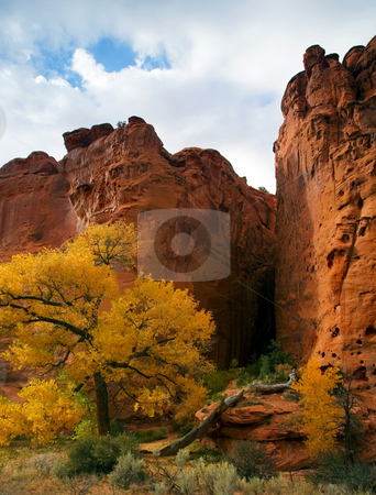 Desert Autumn stock photo, Fall colors contrast against the sandstone alongthe Burr Canyon Road. by Mike Dawson