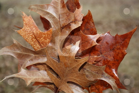Autumn Leaves stock photo,  by Chris Torres
