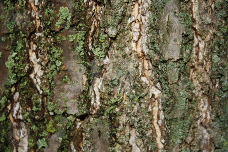 Tree Bark stock photo,  by Chris Torres