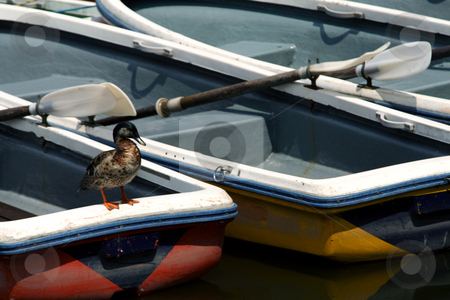 Boat  stock photo, Boat by Rodrigo Reyes Marin