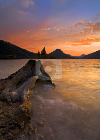 Eroded Away stock photo, A gnarled Stump exposed by the rising waters of Rimrock LAke at sunset by Mike Dawson