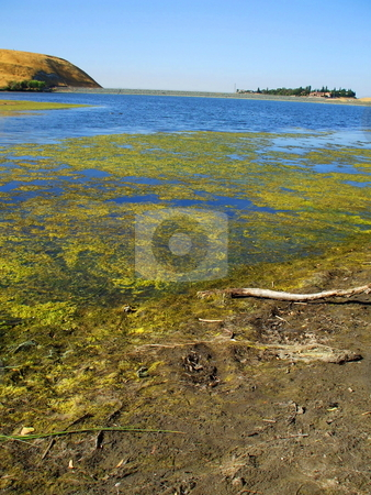 Green Algae stock photo,  by Michael Felix