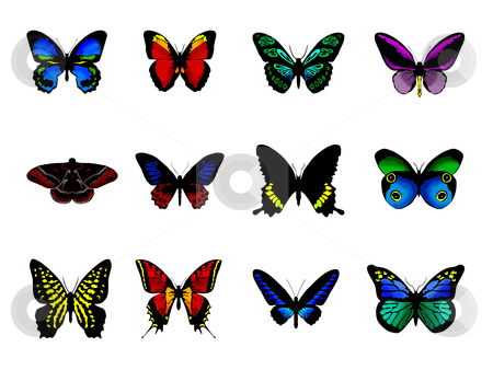 Butterflies stock photo, Butterflies by Luca Bertolli