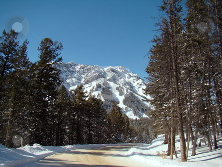 Winter Drive stock photo, Winter drive on snowy road into the Rocky Mountains by CHERYL LAFOND